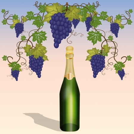 Graphic illustration of bottle in vineyard Vector
