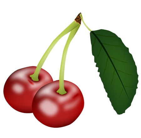 Graphic illustration of sweet cherry isolated on white background