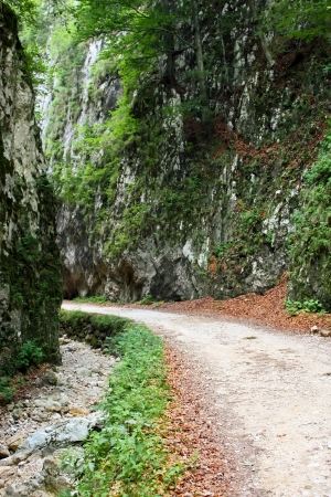 Rural road from Piatra Craiului, natural reservation photo