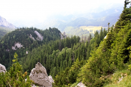 Aerial view over the green forest from piatra Craiului Stock Photo - 14270939