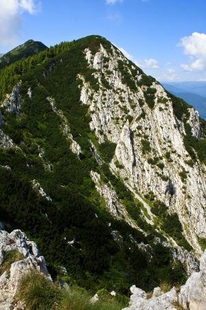 Peak from Piatra craiului full of vegetation photo