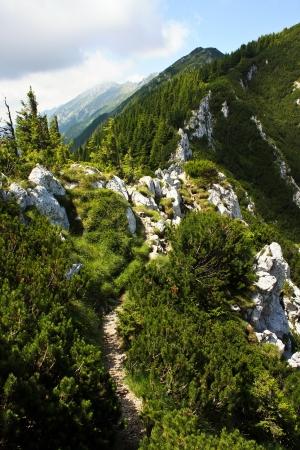 Mountain path from Piatra Craiului, Romania photo