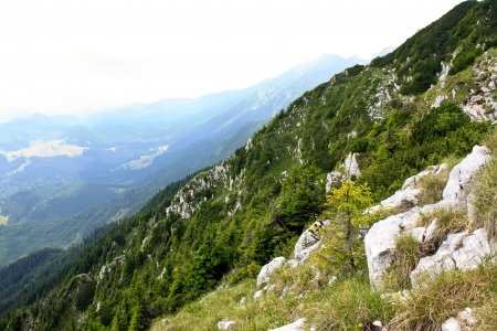 Vegetation on valley from Piatra Craiului Stock Photo - 14271121