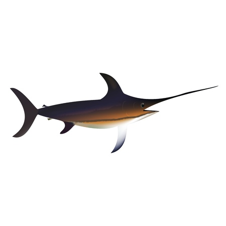 Graphic illustration of swordfish isolated over white background Vector