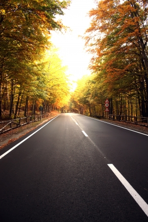 Autumn scene with road to Poiana Brasov Stock Photo - 16177904