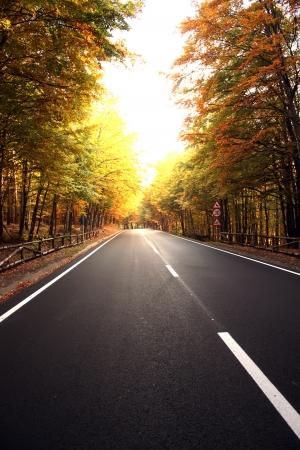 Autumn scene with road to Poiana Brasov Stock Photo - 16177904