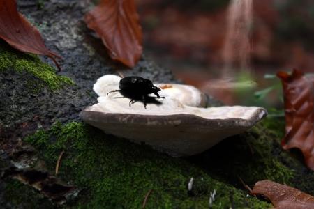 Bug and mushroom macro shot Stock Photo - 16262322