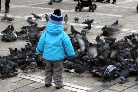 Little boy with birds, outdoors scene photo