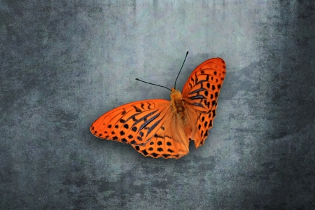 Orange butterfly in front of grunge wall photo