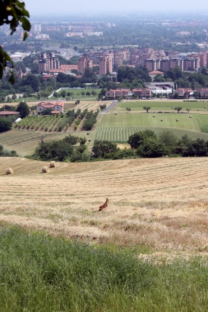 Baby deer in the vicinity of the Bologna city Stock Photo - 17580244