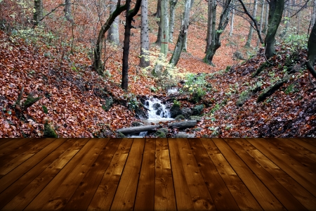 Wallpaper representing  wild forest and wooden floor photo