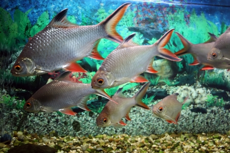 aquarium tank: Group of fishes in aquarium tank  Stock Photo