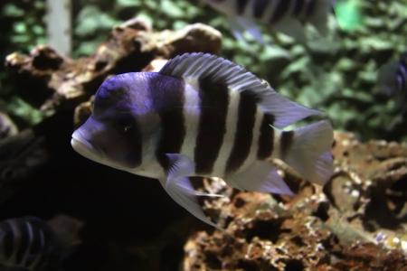 Aquarium exotic fish swimming in water Stock Photo - 21493754