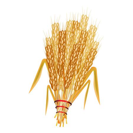 sheaf: Ilustraci�n gr�fica de la gavilla de trigo Vectores