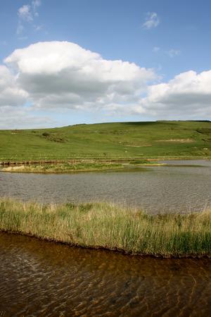 Meadow near Cuckmere beach, East Sussex