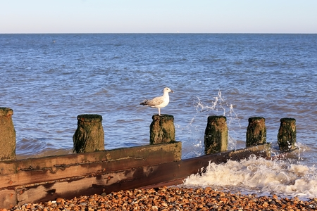Seagull on beach to Eastbourne