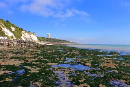 Strange rocks and moss near Eastbourne