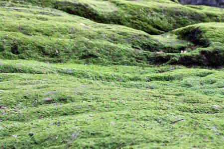 Macro scene of moss field near Ilfracombe Stock Photo