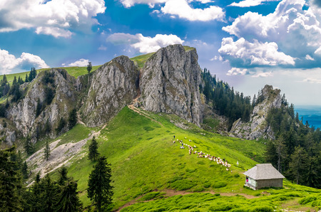 sheepfold: Mountain landscape with sheepfold in Carpathian Mountains Romania. Flock of goates and sheep on a farm in the mountains. Shepherd cottage in alps