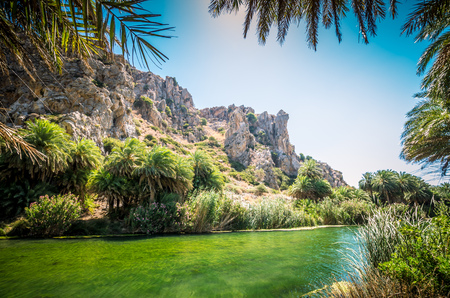 preveli: Preveli palm forest in Crete island, Greece. This amazing tropical forest is located in the gorge of Kourtaliotis near the beach of Preveli.