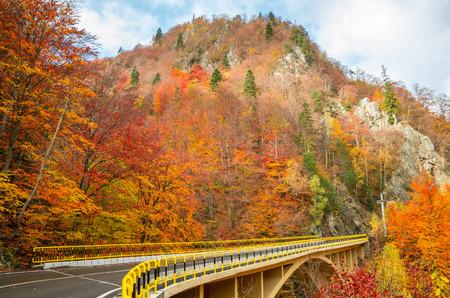 transfagarasan: Autumn landscape. Fall in a mountain forest. Transfagarasan road in fall.