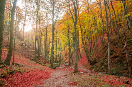 Autumn in Cozia, Carpathian Mountains, Romania. Colorful Autumn Leave. Vivid fall colors in forest. Scenery of nature with sunlight through branches of trees. Reklamní fotografie - 118919507