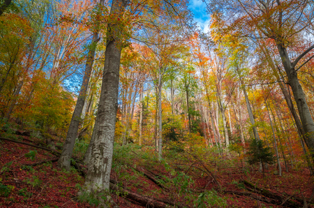 Autumn in Cozia, Carpathian Mountains, Romania. Colorful Autumn Leave. Vivid fall colors in forest. Scenery of nature with sunlight through branches of trees. Reklamní fotografie - 118919516