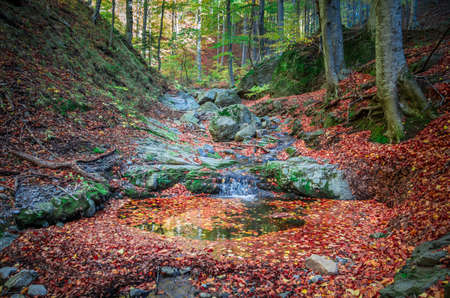 Amazing autumn forest landscape. Little stream flowing into the woods between rocks and trees. The foliage are fall down near the rivulet.