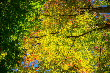 Autumn in Cozia, Carpathian Mountains, Romania. Vivid fall colors in forest. Scenery of nature with sunlight through branches of trees. Colorful Autumn Leaves. Green, yellow, orange, red. Zdjęcie Seryjne