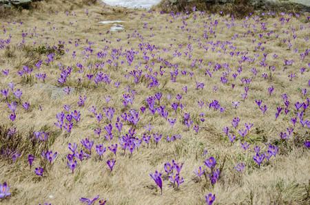 Beautiful purple mountain wild flowers Stock Photo