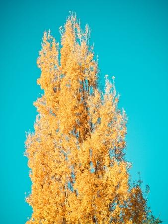 tree Stock Photo - 16189205