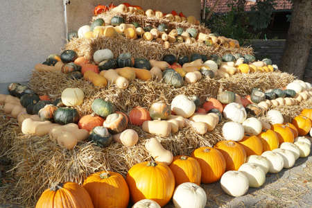 Various types of edible pumpkins or squashes arranged in rows on a pyramid made of straw cubes on a farm. Typical autumn decoration in warm colors as symbol for Halloween and Thanksgiving.