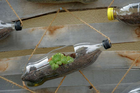 Upcycling of a plastic bottle from soft drinks close up. It is used as flowerpots for succulent plants. The bottles are fixed with string on a vertical wooden structure leaned against a wall.