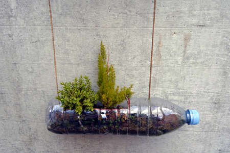 Upcycling of a plastic bottle from soft drink close up. It is used as flowerpot for plants. The bottle with blue lid is fixed with string on a vertical concrete wall. Cutout of a vertical garden.