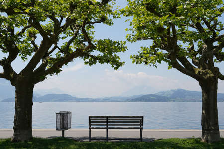 Empty bench at lake Zug in city Zug in Switzerland. The bench is placed between two plate trees. Their crowns meet above in the bench.