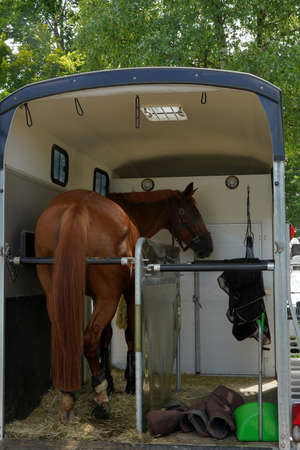 Racing horse in a horse trailer. It is open and park. There is a brown horse inside, in back view.