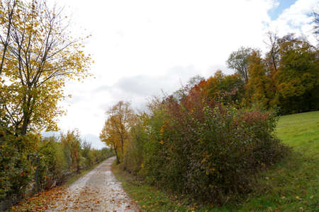 Autumn landscape with country road. The road is surrounded with trees and bushes with colorful foliage. Overcast sky with copy space is on the background.