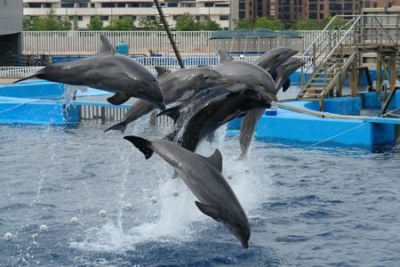 exotic gleam: Dolphins jump in the air Stock Photo
