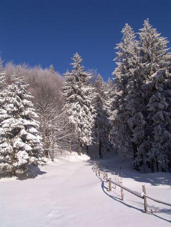 wildwood: Winter in Ciucas Mountains: snow, tree, sky