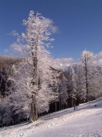 wintriness: Winter in Ciucas Mountains: snow, tree, sky
