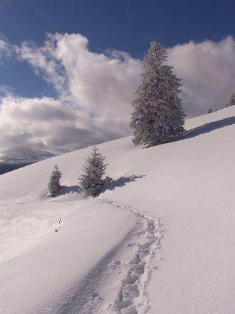 Winter in Ciucas Mountains: snow, tree, sky Stock Photo - 604960