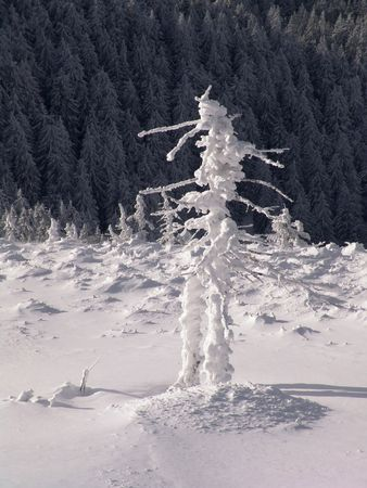 Winter in Ciucas Mountains: snow, tree, sky Stock Photo - 604955