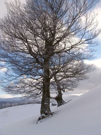Winter in Ciucas Mountains: snow, tree, sky Stock Photo - 604952