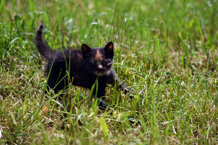 dauntless: Attack of a fearless kitten