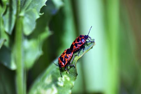 bug's: Spring bugs