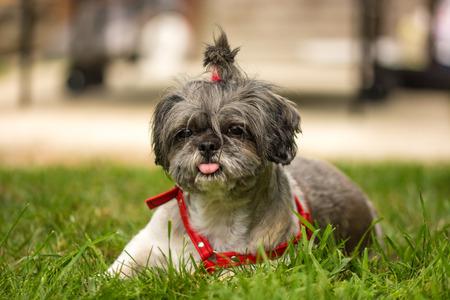 bijoux: Bijoux , a sweet  dog