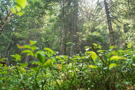 vegetation: Vegetation Stock Photo