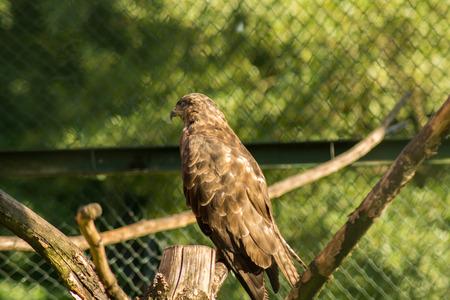 predatory: Predatory bird