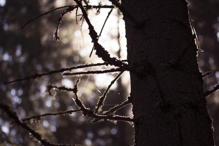 cobwebs: Cobwebs through trees