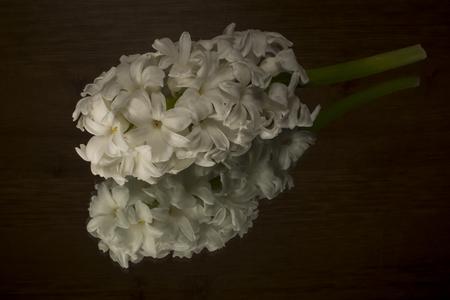 phal: White hyacinth isolated on black  background